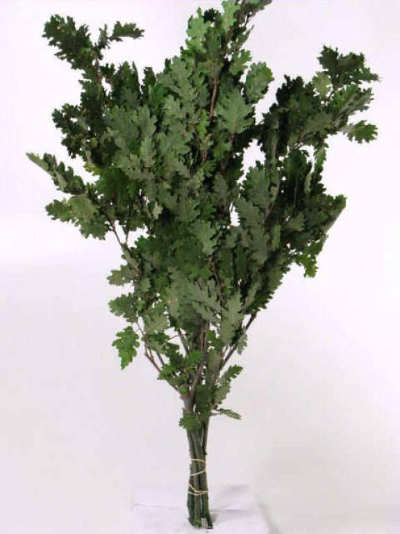 Дубовые листья зеленые 50-60 см
