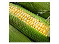 Кукурудза кормова Кадр 267 МВ 1 кг