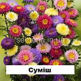 Айстра Арлекін (колір на вибір) 2 г., фото 6