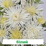 Айстра Валькірія (колір на вибір) 1 г., фото 2