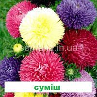 Айстра Гала (голчаста, на зріз)(колір на вибір) 500 шт., фото 1