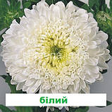 Айстра Матадор на зріз (колір на вибір) 500 шт., фото 2