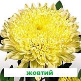 Айстра Матадор на зріз (колір на вибір) 500 шт., фото 3