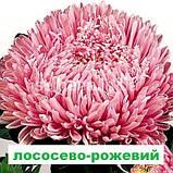 Айстра Матадор на зріз (колір на вибір) 500 шт., фото 4
