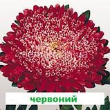Айстра Матадор на зріз (колір на вибір) 500 шт., фото 5