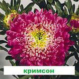 Айстра Матадор на зріз (колір на вибір) 500 шт., фото 6
