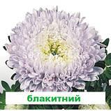 Айстра Матадор на зріз (колір на вибір) 500 шт., фото 7