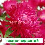 Айстра Леді Корал (колір на вибір) 1г., фото 5