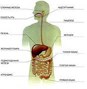Препараты для желудка, кишечника, печени, поджелудочной железы