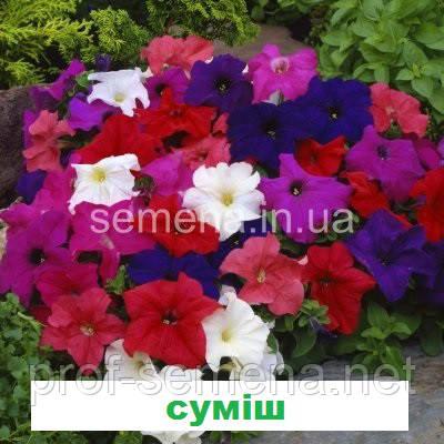 Петунія карликова грандіфлора Лімбо  F1 (колір на вибір) 1000 шт.