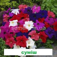 Петунія карликова грандіфлора Лімбо  F1 (колір на вибір) 1000 шт., фото 1