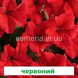 Петунія грандіфлора Суперкаскад F1 (колір на вибір) 1000 шт., фото 4