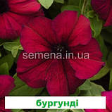 Петунія грандіфлора Суперкаскад F1 (колір на вибір) 1000 шт., фото 5