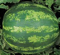 Семена арбуза Кримсон Свит, 500 г (Clause)