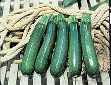 Семена кабачка Тармино F1 (500 сем.) Clause