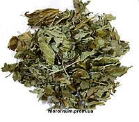 Лист Шелковицы черной, 50 грамм