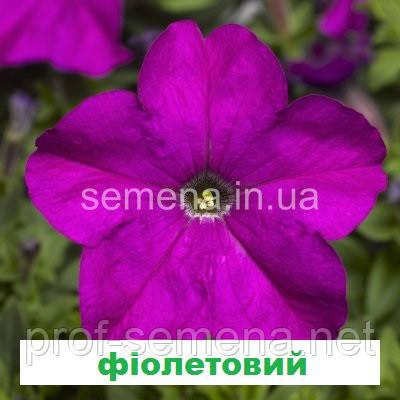 Петунія грандіфлора Шторм F1 (колір на вибір) 1000 шт.