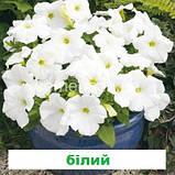 Петунія грандіфлора Шторм F1 (колір на вибір) 1000 шт., фото 2
