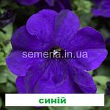 Петунія грандіфлора Шторм F1 (колір на вибір) 1000 шт., фото 3