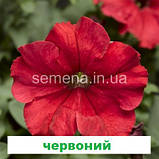 Петунія грандіфлора Шторм F1 (колір на вибір) 1000 шт., фото 4