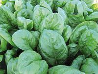Семена шпината Рэм F1. Упаковка 25000 семян. Производитель Enza Zaden
