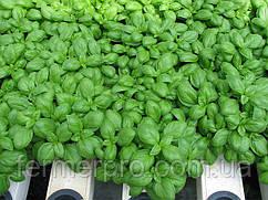 Базилик зеленый Мариан 1000 грамм  Enza Zaden