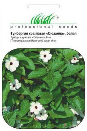 Семена тунбергии крылатой Сюзанна белая 0,2 г, Pan American flowers, фото 2