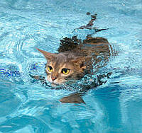 Купание кошек. Как покупать кота?