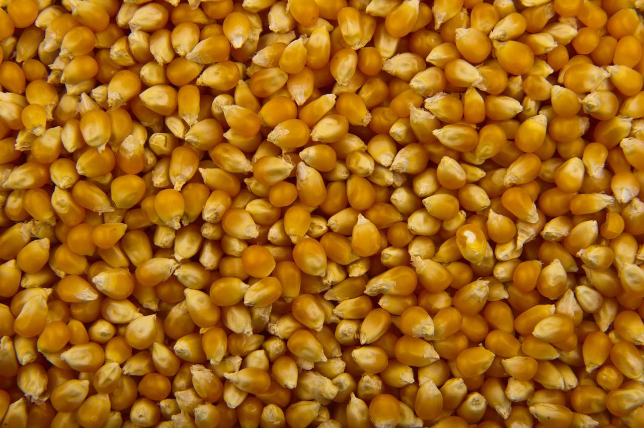 Семена кукурузы НС 2652 (NS) (ФАО 260)