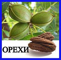Орех Пекан ( 1 летние саженцы )