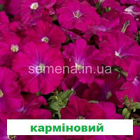 Петунія мультіфлора Селебреті F1 (колір на вибір) 1000 шт.