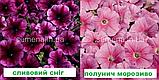 Петунія мультіфлора Селебреті F1 (колір на вибір) 500 шт., фото 4