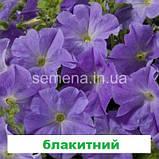 Петунія мультіфлора Селебреті F1 (колір на вибір) 500 шт., фото 5