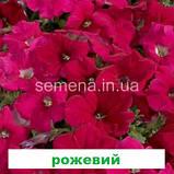 Петунія мультіфлора Селебреті F1 (колір на вибір) 500 шт., фото 8