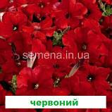Петунія мультіфлора Селебреті F1 (колір на вибір) 500 шт., фото 9