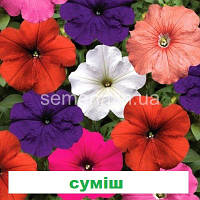 Петунія мультіфлора Ура F1 (колір на вибір) 1000 шт., фото 1