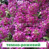 Аліссум (Лобулярія) Істе Боннет 1000 шт. (колір на вибір), фото 3