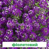 Аліссум (Лобулярія) Істе Боннет 1000 шт. (колір на вибір), фото 4