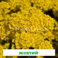 Аліссум  Гірське золото 5 г., фото 1