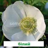 Анемона Гармонія (колір на вибір) 50 шт., фото 2