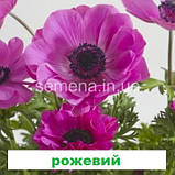 Анемона Гармонія (колір на вибір) 50 шт., фото 4