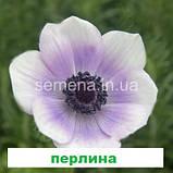 Анемона Гармонія (колір на вибір) 50 шт., фото 3
