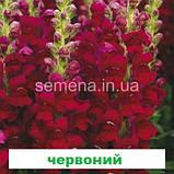 Антіррінум Опус F1 (III/IV група) (колір на вибір) 100 шт., фото 8