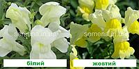 Антіррінум Снеппі F1 (колір на вибір) 100 шт (карликовий)