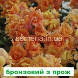 Антіррінум Твінні  F1 (колір на вибір) 100 шт (карликовий махровий), фото 7