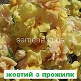 Антіррінум Твінні  F1 (колір на вибір) 100 шт (карликовий махровий), фото 6