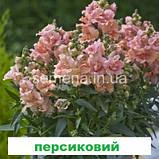 Антіррінум Твінні  F1 (колір на вибір) 100 шт (карликовий махровий), фото 4