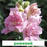 Антіррінум Твінні  F1 (колір на вибір) 100 шт (карликовий махровий), фото 5