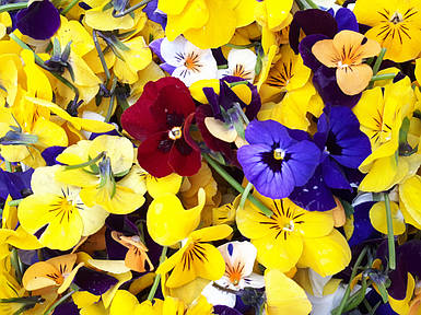 Пищевые цветы