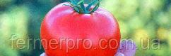 Семена томата Сагатан F1 2500 семян Syngenta